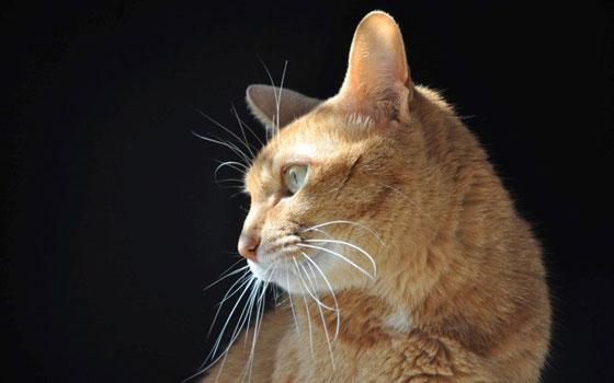 【画像2】猫の寿命は平均13〜15年。長ければ20年近く生きることも。最期の一瞬まで責任を持って寄り添いたい(写真撮影:嘉屋恭子)