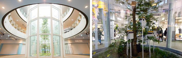 【画像4】左:光が満ちる「テラリウム」のシンボルツリー(画像提供:三井不動産)。右:小鳥が巣をつくりに訪れるかも?(撮影:金井直子)