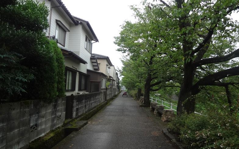 【画像3】桜並木に面したリフォーム前の街並み(写真提供:喜多ハウジング)
