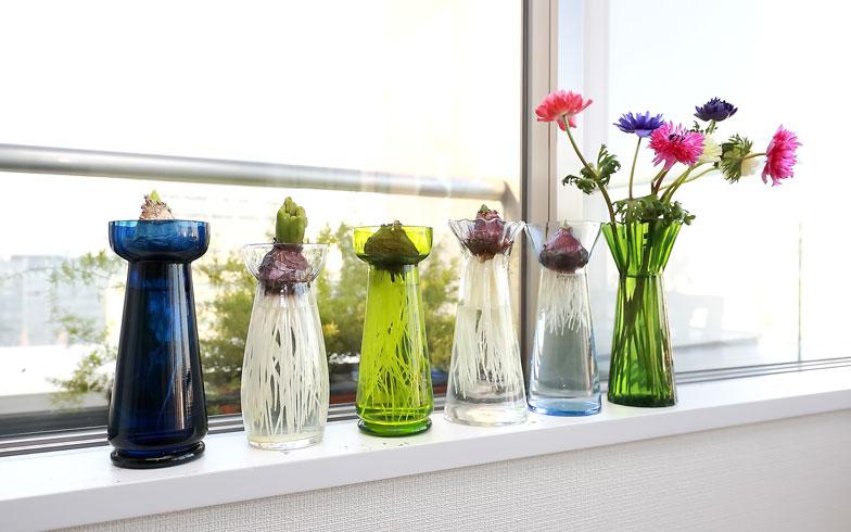 【画像3】ベルリンで購入し、大切に持ち帰ったアンティークのヒヤシンス用花瓶。窓辺でガラスが光を受けて美しく(写真:飯田照明)