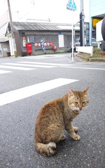 【画像6】志賀島で待ってるニャー!(写真撮影/フルカワカイ)