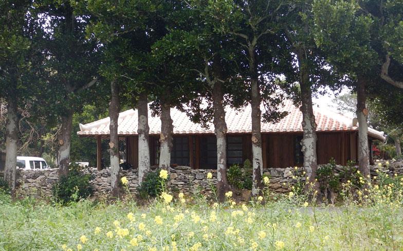 【画像6】伊藤さんの住む古民家は防風林が残されている。こうした風景は、島から消えようとしている(写真撮影:伊藤加奈子)