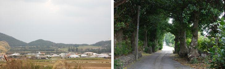 【画像1】(左)勢理客(じっちゃく)の集落。個人個人で修復しているようだが、昔ながらの沖縄の家の特徴的な赤瓦が少なくなっているのは仕方のないことかもしれない。(右)伊是名の集落に入っていくと、フクギ並木が続いているが、こうした風景も残していってほしいもの(写真撮影:伊藤加奈子)