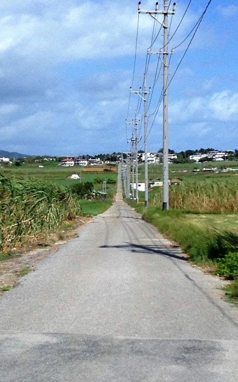 【画像5】島の中央を貫く、通称「シュガーロード」。両脇にはサトウキビ畑が広がる。「島の道路が舗装されたのは最近。車がない時代は歩いてどこまでも行きました」と山城ハルさんは言う。山城さんは、今でもゲートボールに歩いて通う健脚の持ち主(写真撮影:伊藤加奈子)