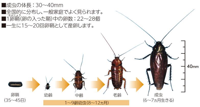 ゴキブリ どこから 小さい