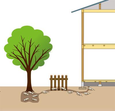 【図2】シロアリの侵入経路(画像提供:テオリアハウスクリニック)