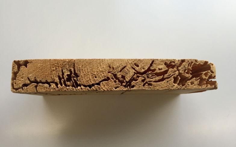 【画像3】シロアリに食べられた木材。手で持ってみると想像以上に軽く、スカスカのスポンジのよう(撮影:SUUMOジャーナル編集部)