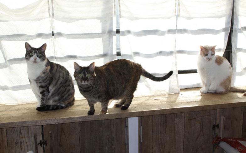 猫3匹も人もハッピー、240万円のリフォームでどんな空間に?