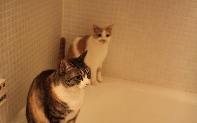 【画像8】バスルームから長女と次女が「ママ、何してるの?」(写真撮影:Kさん)