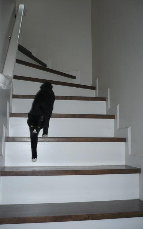 【画像3】愛猫クレオパトラ(16歳)は銀座の捨て猫、今はウチの女王様(写真撮影:藤井繁子)