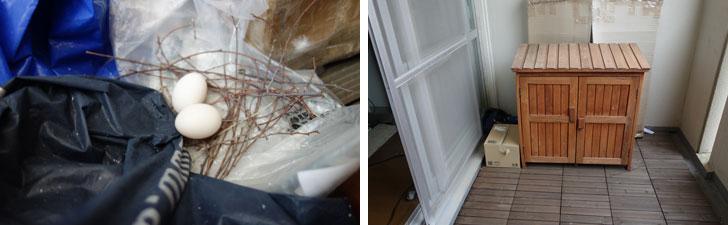 【画像1】後で片づけようと置いてあったビニール袋に卵が! 場所は右写真の収納左側(写真撮影:金井直子)