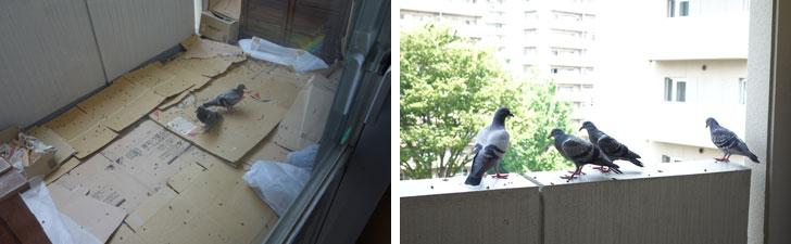 【画像6】2羽目も飛べるように! 巣立ちを期待しましたが……(写真撮影:金井直子)
