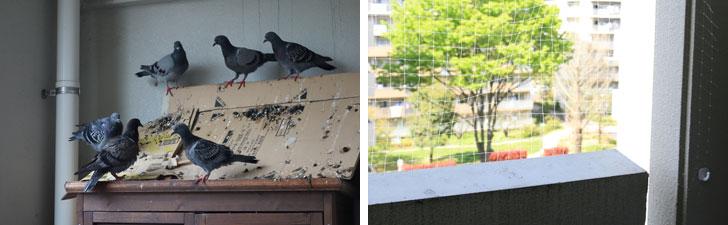 【画像7】恐ろしいことに、わが家が鳩の溜まり場に! その後、右写真のように目立たない白ネットで防御(写真撮影:金井直子)