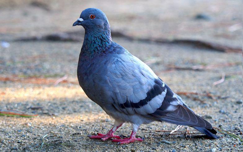 ある日ベランダに鳩の巣が![後編] 被害に遭う前に対策を