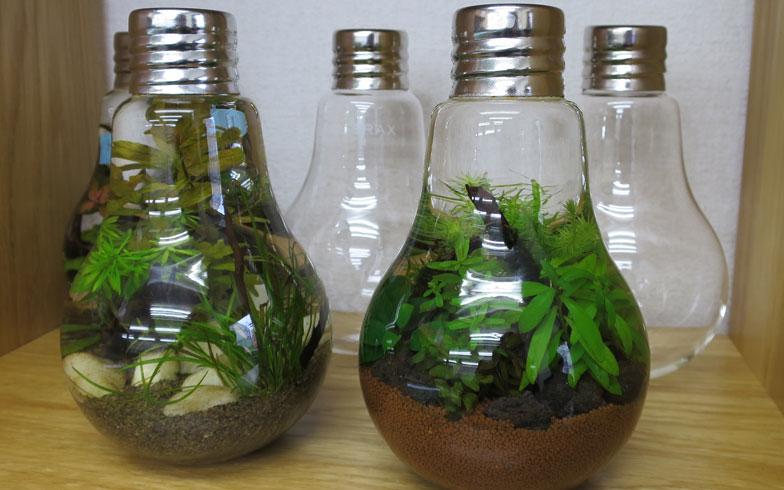 小瓶の中に「水中箱庭」を再現! 楽しい手作りグラスアクアリウム