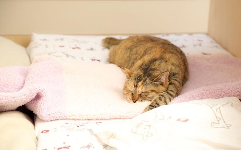 【画像5】その目線の先でスヤスヤ眠る猫ちゃん。うーちゃん6歳。命名はうずらっぽい柄から(写真撮影:藤原葉子)