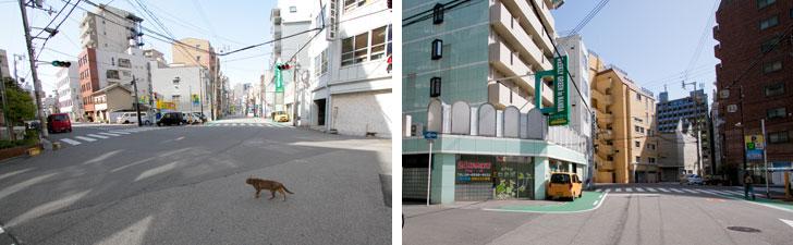 【画像9】裏道でも道路幅が広く、のんびりとした印象。猫がゆっくりと交差点を横切っていく……(左)マンションやビルなど中層建築物が並ぶ街並み(右)(写真撮影/井村幸治)