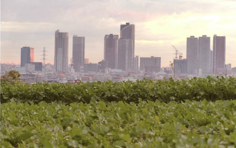 """意外! 工業都市・川崎市の隠れた名物は""""野菜""""だった"""
