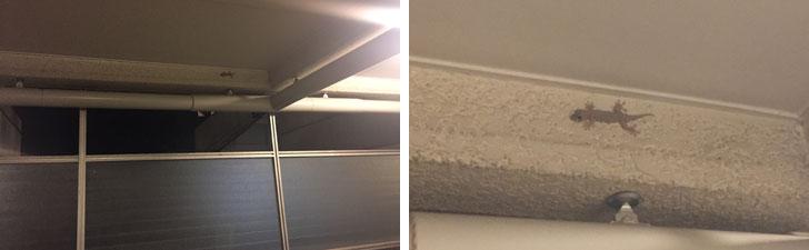 【画像1】筆者の住む都内のマンションにはほぼ毎日ヤモリが現れます(写真撮影/SUUMOジャーナル編集部)