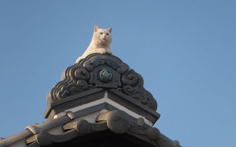 【画像3】こんな屋根の風景にほっとなごむ(写真/PIXTA)