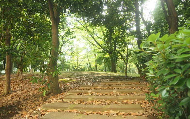【画像4】緑豊かな敷地内は、森の中にいるような清々しさ。落葉樹が多いため、落ち葉が排水溝に詰まるといった問題も。植栽の見直しを含めて、話し合いが行われている(写真撮影/SUUMOジャーナル編集部)