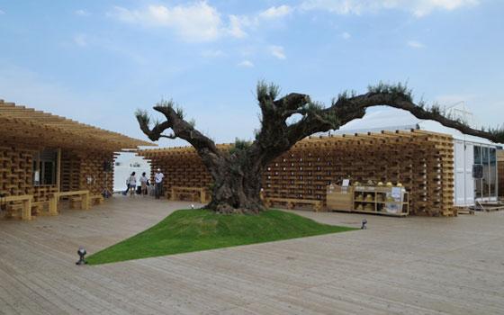 【画像1】会場のシンボルツリー的な、オリーブの古木。プラントハンター西島清順氏(そら植物園)と住友林業緑化により、長い船旅を経て移植展示(写真撮影/藤井繁子)