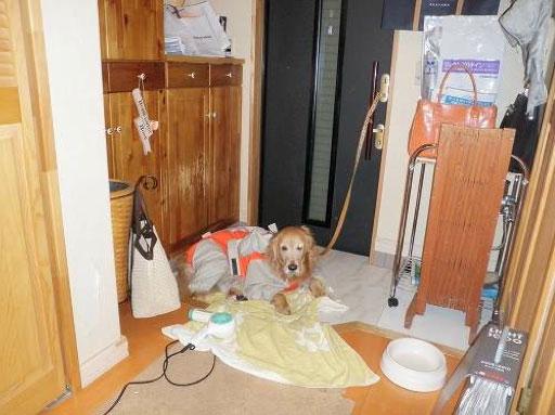 【画像2】Before:リフォーム前の玄関まわり。お散歩から帰った愛犬(北海道は雪・泥道が多いからレインコート必須!)が、モノにあふれたなかで……(写真提供/池田千夏子さん)
