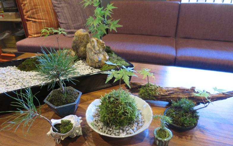 【画像3】こちらは取材用にお二人が即興で造ってくださったもの。陶器や貝、古木などを器にして、苔や芽吹いた木を植えてみたものを集めるだけでも趣が出る(写真撮影/末吉陽子)