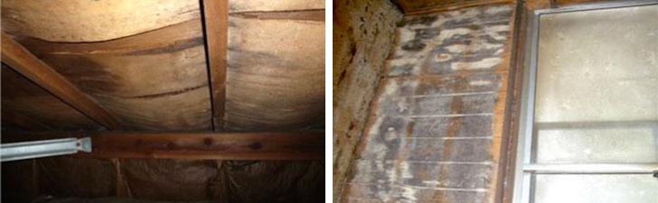 【画像2】雨漏りが室内まで浸入していなくても油断大敵。屋根裏が腐食していたり(写真左)、壁内部にカビが発生している(右)場合も多いそう(画像提供/街の屋根やさん)