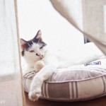 大阪にもできた「猫付きシェアハウス」 今後も増える?
