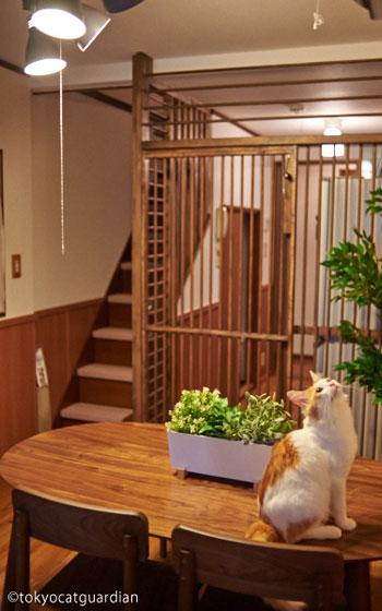 【画像2】リビングから見たキッチンと階段(画像提供/東京キャットガーディアン)