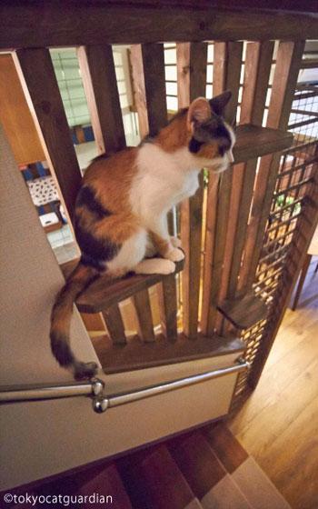 【画像5】階段横のキャットステップ(画像提供/東京キャットフガーディアン)