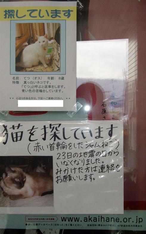 【画像5】飼い主とペットが生き別れ、保護されたペットも少なくない。そんなとき、マイクロチップの装着も飼い主探しに効果的(写真提供/アナイス)