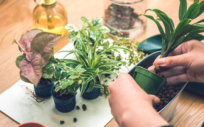 観葉植物が臭い! その原因と対策とは?