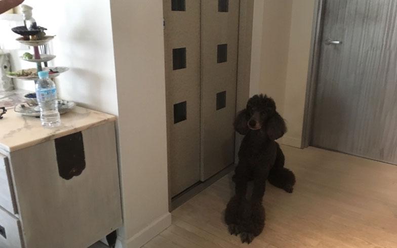 押入を、ホームエレベーターにリフォーム! 人も犬も将来安心