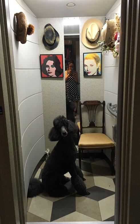 【画像1】友人宅の愛犬はスタンダードプードル。お利口にエレベーターで上下階へ移動(写真撮影/リサブレア)