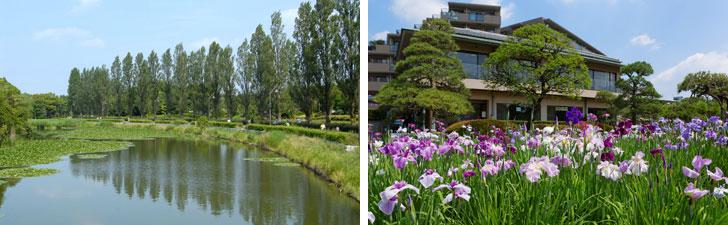 【画像1】葛飾区には、都内最大規模の水郷公園「水元公園」(左)や花菖蒲の名所「堀切菖蒲園」(右)といった自然のスポットがあるのも魅力(写真/PIXTA)
