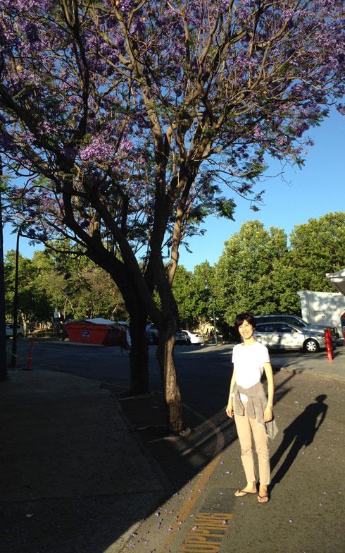 【画像1】紫色の花を咲かせているのは、ジャカランダの木。「ジャカランダは、パースの初夏を彩る花。鮮やかな紫色で甘い香りがします」(小島さん)。桜が日本で春を告げる花なら、ジャカランダはオーストラリアの夏を告げる存在なのだとか(写真提供/小島慶子さん)