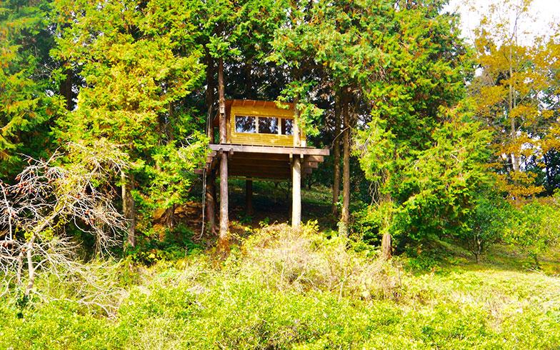 【画像1】約7200坪の広大な田畑を見下ろすようにつくられたツリーハウス。ここで朝日をふんだんに浴びながら瞑想(めいそう)やヨガにふければ身も心も整えることができそう(写真撮影/フルカワカイ)