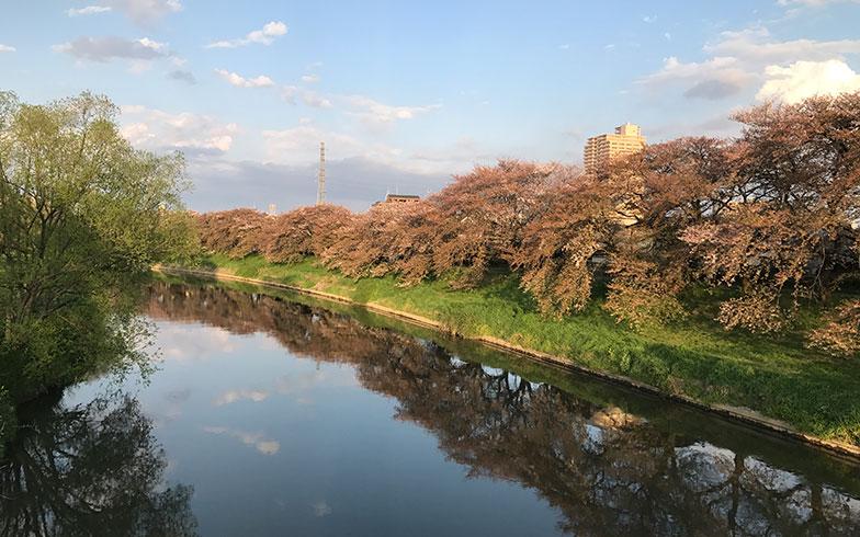【画像1】元荒川沿いの桜並木(写真撮影/富谷瑠美)