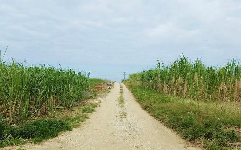 【画像5】島の内陸部にはサトウキビ畑が広がる(写真撮影/SUUMOジャーナル編集部)