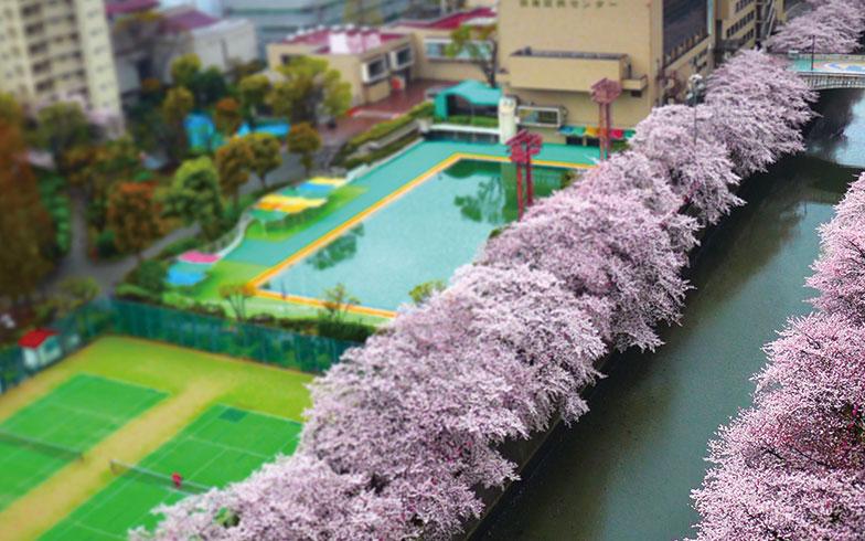 【画像2】有森さん宅のバルコニーからの眺め。美しい風景は気持ちをリセットする(写真撮影/有森裕子さん)