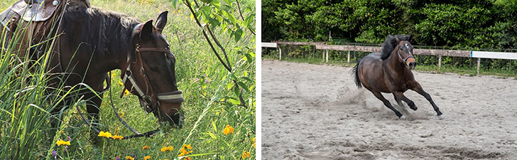 【画像5】自宅に連れ帰り、懸命に世話をした結果、元気になったマリヤ。緑の野で野草に触れたり、馬場で思いっきり駆け回ったりするのが楽しそうです(画像提供/馬Cafe マリヤの風)