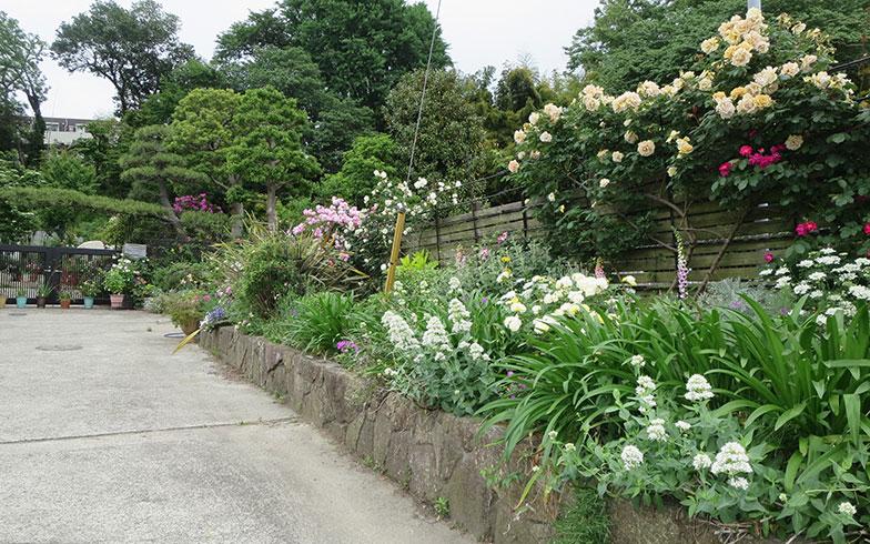 【画像2】道路から家へのアプローチ、石垣とフェンスの草花に目を奪われる(写真撮影/藤井繁子)