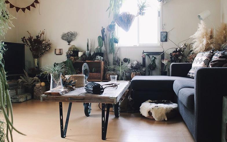 【画像1】部屋の主役はエアプランツ、サボテン、多肉植物といったグリーンたち。植物をつるすハンギングも効果的(写真提供/MMさん)