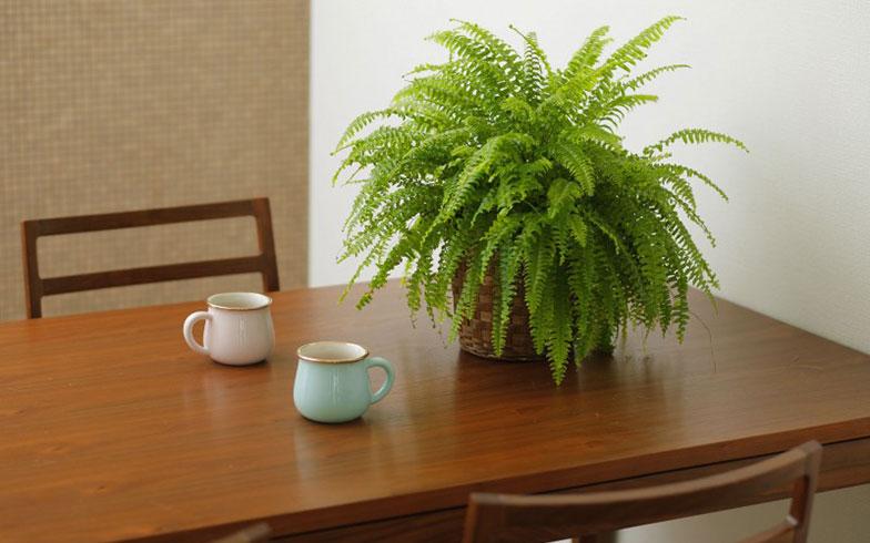 136082 sub08 家具、洋服、絵画、観葉植物……。暮らしを豊かにする、今注目のレンタルサービス4選
