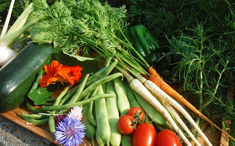 【画像1】すべてポタジェで収穫したもの。トマト、ズッキーニ、インゲン、ミニニンジンなど。農薬は使用せず、肥料もほとんど使っていない(画像提供/藤井純子さん)