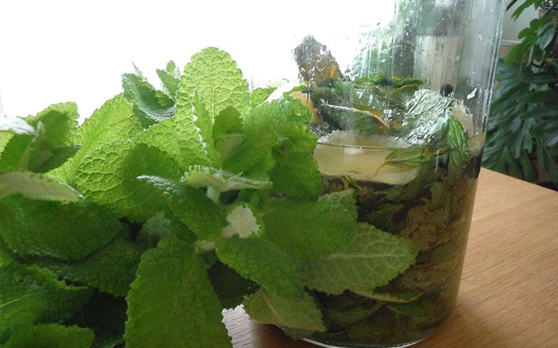 【画像11】ミントの種類は、スペアミントかペパーミントが香りがよく、オススメ(画像提供/藤井純子さん)