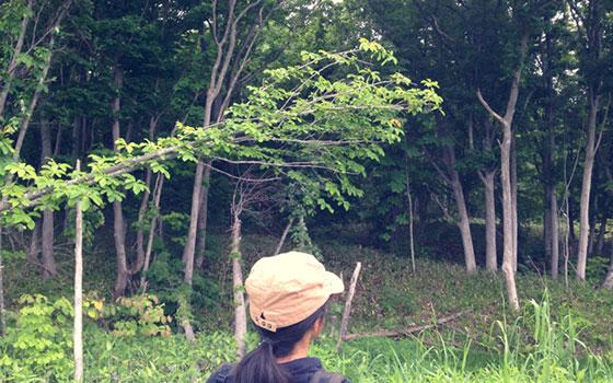 【画像2】向かいが売っているという森林だが、手前に深い沢があって入ることができない(写真撮影/來嶋路子)