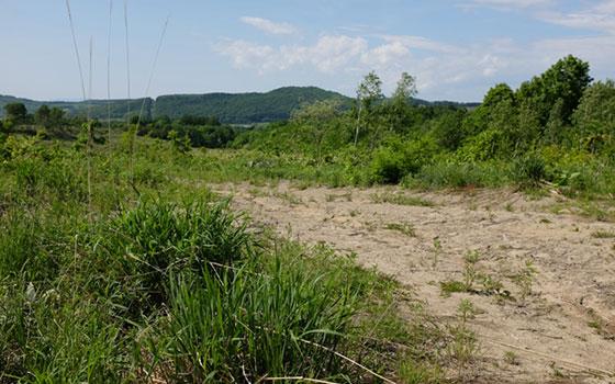 【画像4】農家の林宏さんと共同購入した土地。木がほとんど伐採されていて、ブルードーザーが通った道がある(写真撮影/來嶋路子)